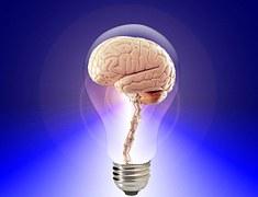 brain-20424__180
